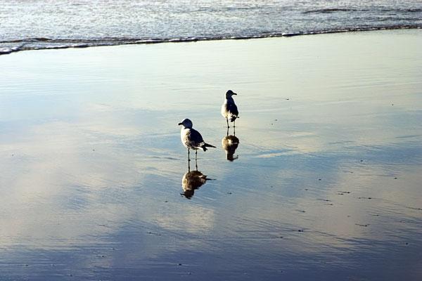 12-25-087-2gulls.jpg