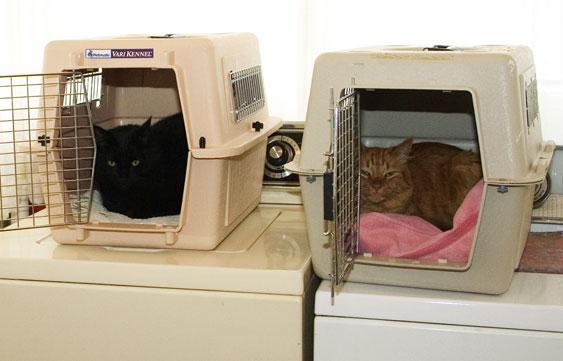 06-06-012cats.jpg