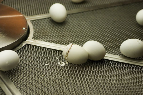 09-15-051-egg-1.jpg
