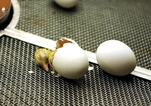 09-15-055-egg-2.jpg