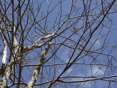 April-leaf-4.10.04.jpg