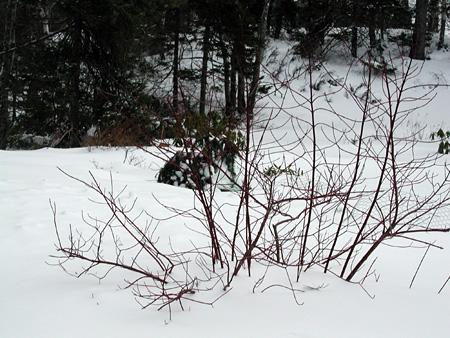 Snow2.2.23.04.jpg