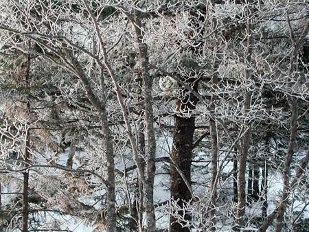Snow4.2.26.04.jpg
