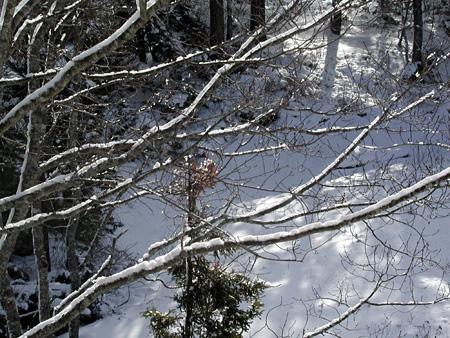 SnowC.jpg