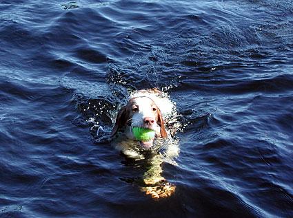 Swim-Cassie.jpg