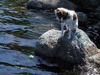 Swim-ball.jpg