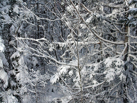 Wintersnow4.jpg