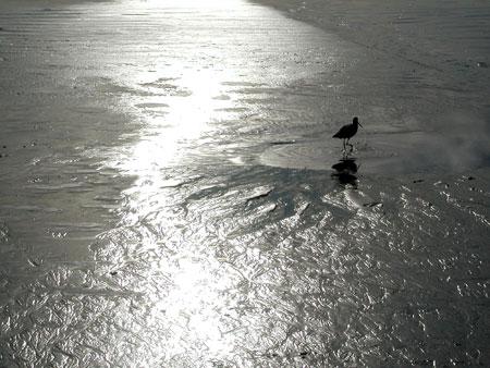 beach-bird.jpg