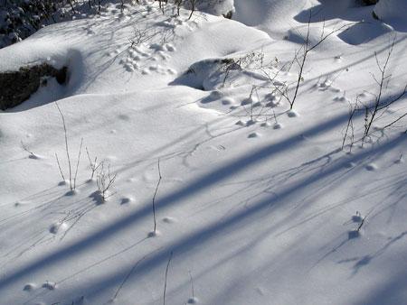 snow.-12.28.04.tracks.jpg