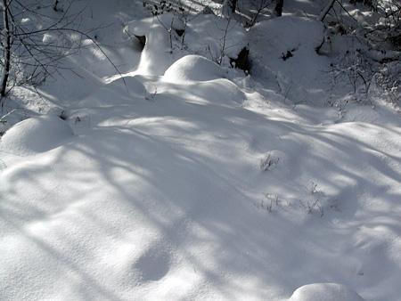 snowy3.jpg