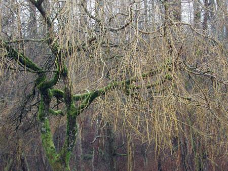 V-trees.jpg