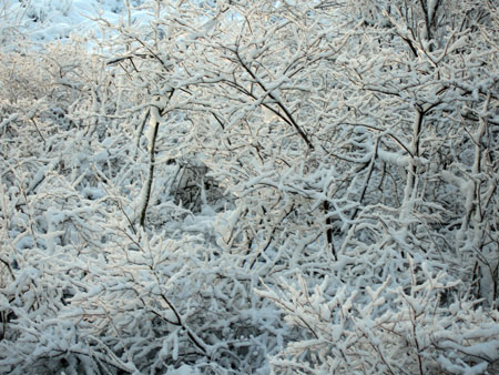 snow-dec-1.jpg