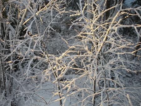 snow-dec-2.jpg