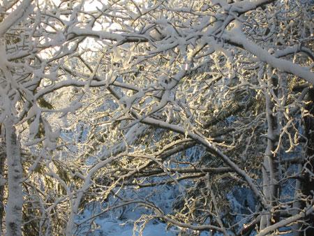 snow-dec-4.jpg