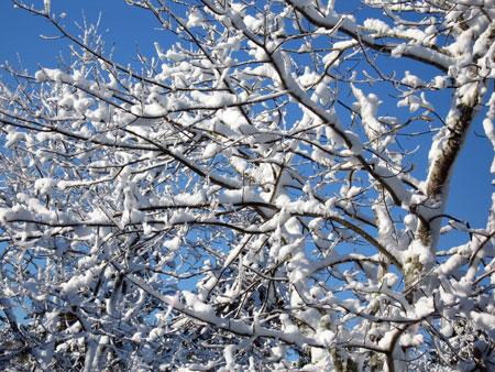 snow-dec-5.jpg