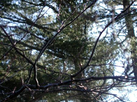 wet-branches.jpg