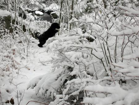 Lila-snow-1.jpg