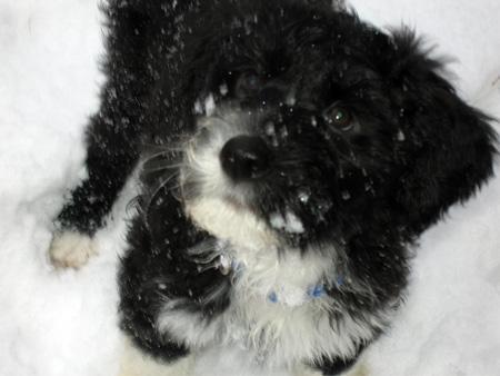 Lila-snow-4.jpg