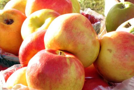 Shaker-apples.jpg