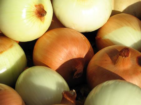 Shaker-onions.jpg