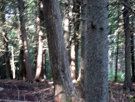 Vp-trees.jpg