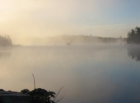 fog2-6.6.06.jpg