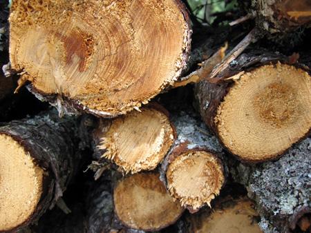 woodpile-7.15.06.jpg