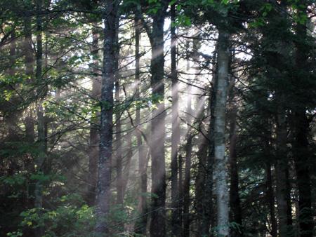 woods-7.15.06.jpg