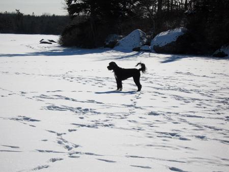 Lila-ice-2.11.07.jpg