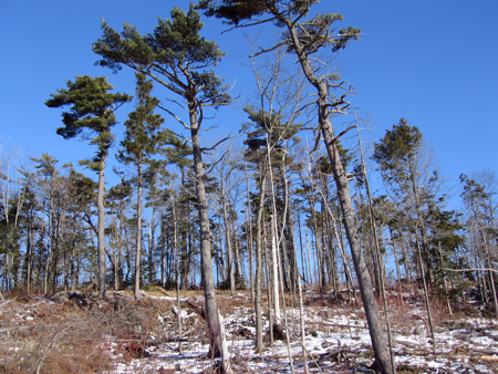 ppp.trees.jpg