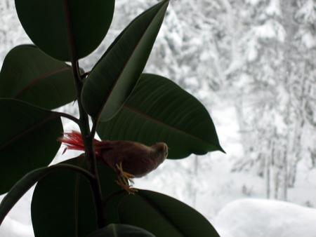 snow-bird.jpg