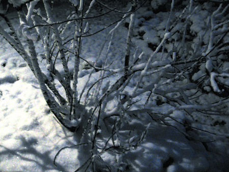 wintersnow.jpg