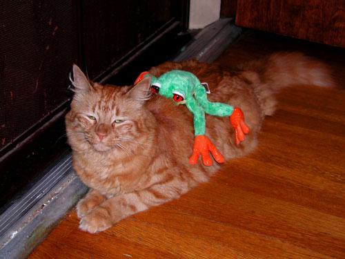 cat-w-frog.jpg