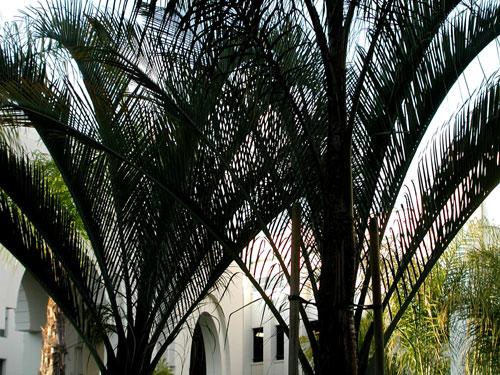 palm-fans.jpg