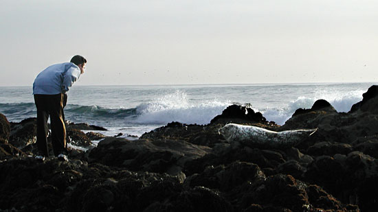 seal-guy.jpg