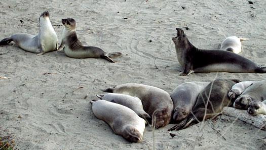 seal-talk.jpg