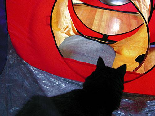 cat-tent.jpg