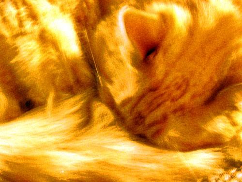 Dante-curled-up.jpg
