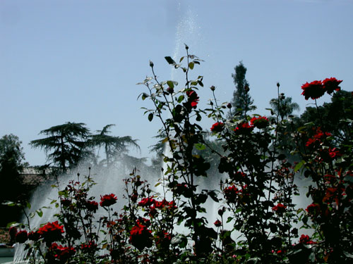 rose-fountain-CU.jpg