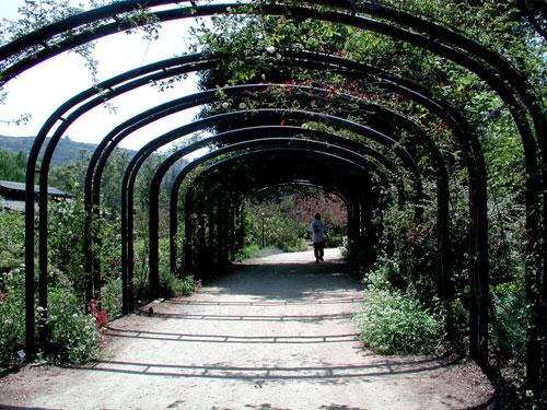trellis-arches.jpg