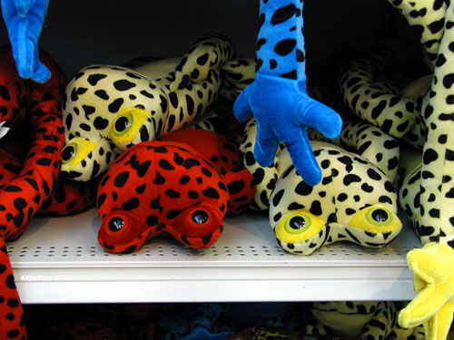 frogs-on-shelf.jpg