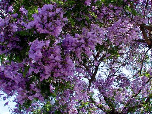 jac-MCU-flowers.jpg