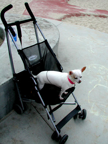 stroller-dog.jpg