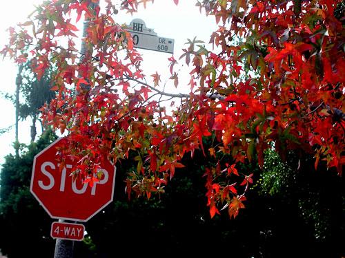 autumn-stop.jpg
