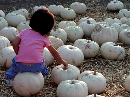 pumpkin-girl.jpg