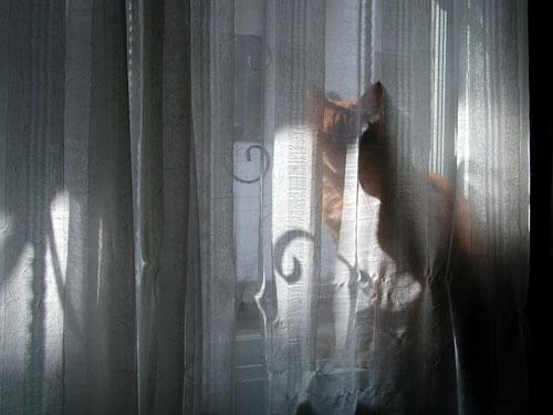 cat-veil.jpg