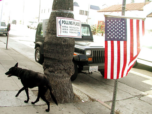 dog-vote.jpg