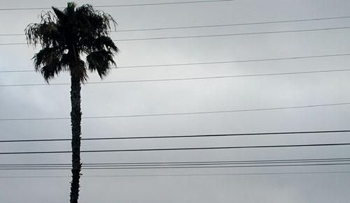palm-wires.jpg